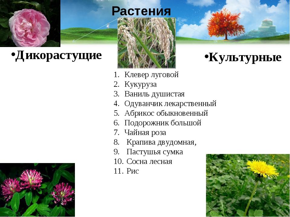 Растения Культурные Дикорастущие Клевер луговой Кукуруза Ваниль душистая Одув...