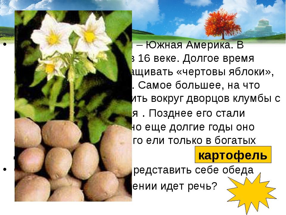 Родина этого растения – Южная Америка. В Европе о нем узнали в 16 веке. Долго...