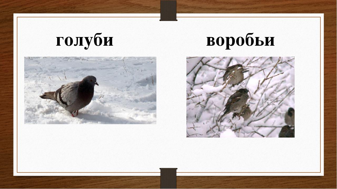 голуби воробьи