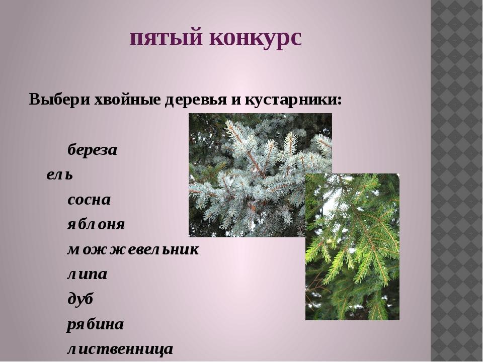 пятый конкурс Выбери хвойные деревья и кустарники: береза ель сосна яблоня...