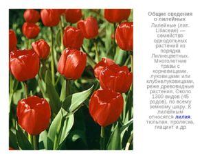 Общие сведения о лилейных Лилейные (лат. Liliaceae) — семейство однодольных р