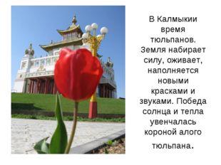 В Калмыкии время тюльпанов. Земля набирает силу, оживает, наполняется новыми