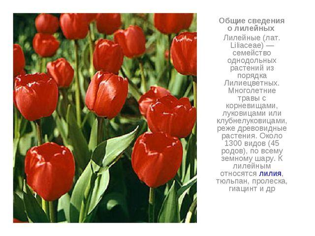 Общие сведения о лилейных Лилейные (лат. Liliaceae) — семейство однодольных р...