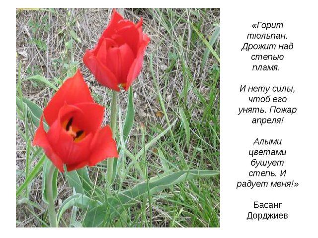 «Горит тюльпан. Дрожит над степью пламя. И нету силы, чтоб его унять. Пожар а...