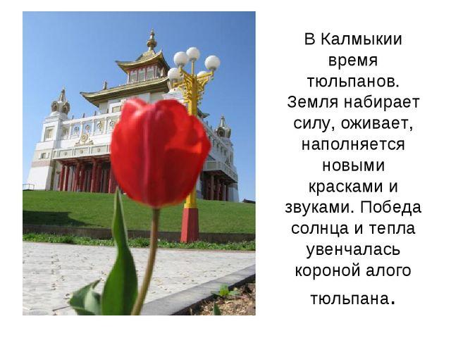 В Калмыкии время тюльпанов. Земля набирает силу, оживает, наполняется новыми...