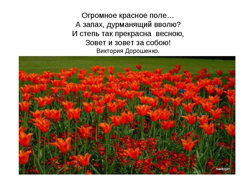 Огромное красное поле… А запах, дурманящий вволю? И степь так прекрасна весн...