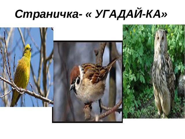 Страничка- « УГАДАЙ-КА»