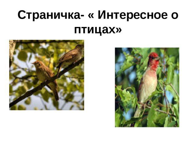 Страничка- « Интересное о птицах»