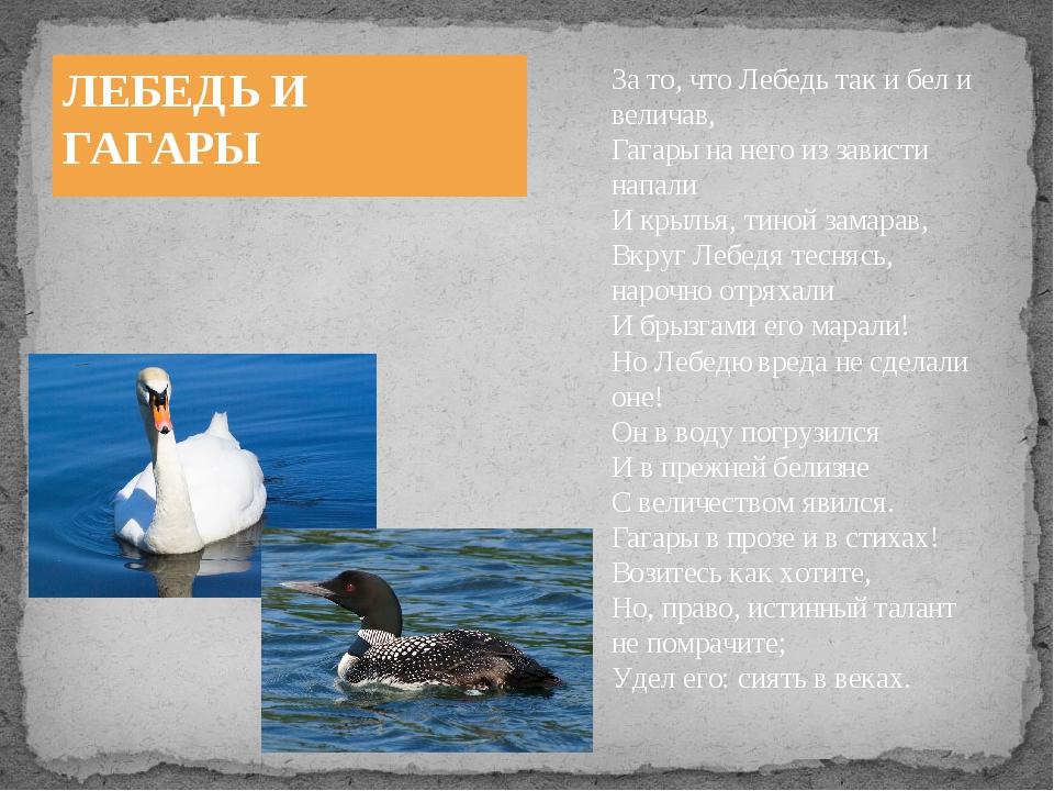 ЛЕБЕДЬ И ГАГАРЫ За то, что Лебедь так и бел и величав, Гагары на него из зави...