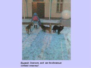 Вывод: Значит, всё же бездомные собаки опасны!