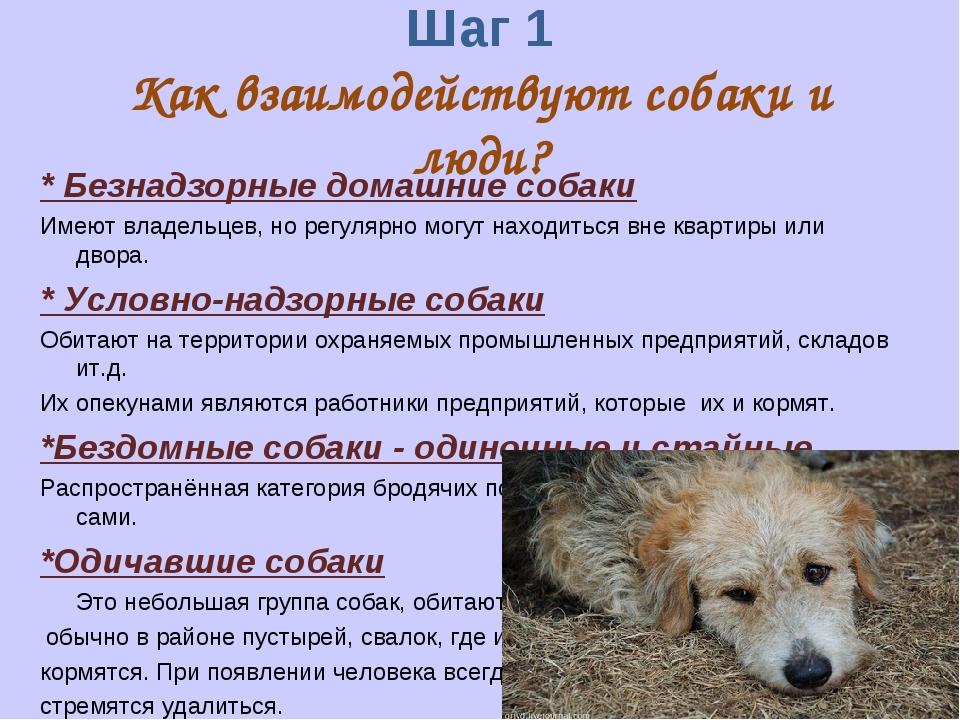 Шаг 1 Как взаимодействуют собаки и люди? * Безнадзорные домашние собаки Имеют...