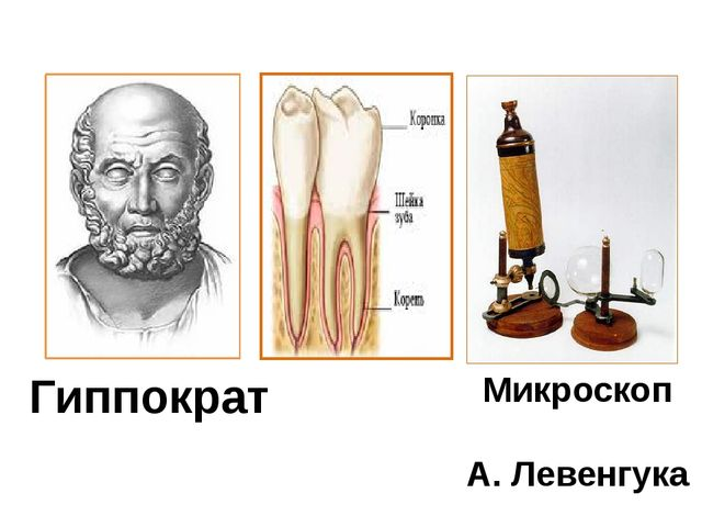 Гиппократ Микроскоп А. Левенгука