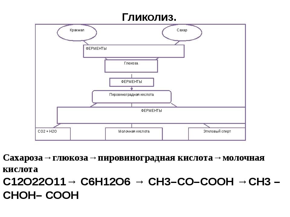 Гликолиз. Сахароза→глюкоза→пировиноградная кислота→молочная кислота С12О22О1...