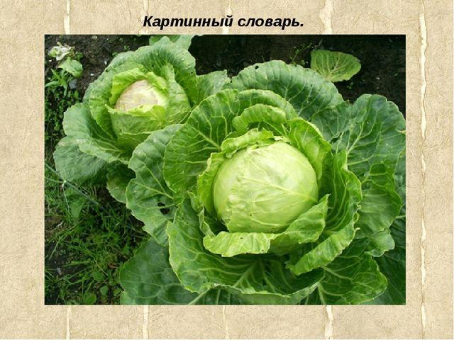 Картинный словарь.