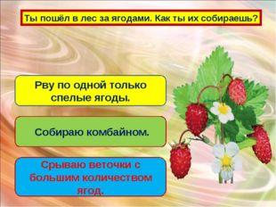 Ты пошёл в лес за ягодами. Как ты их собираешь? Рву по одной только спелые яг