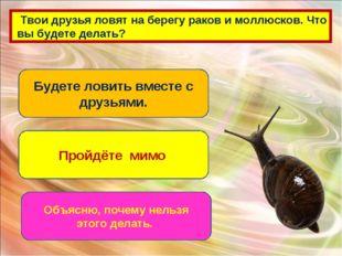 Твои друзья ловят на берегу раков и моллюсков. Что вы будете делать? Будете