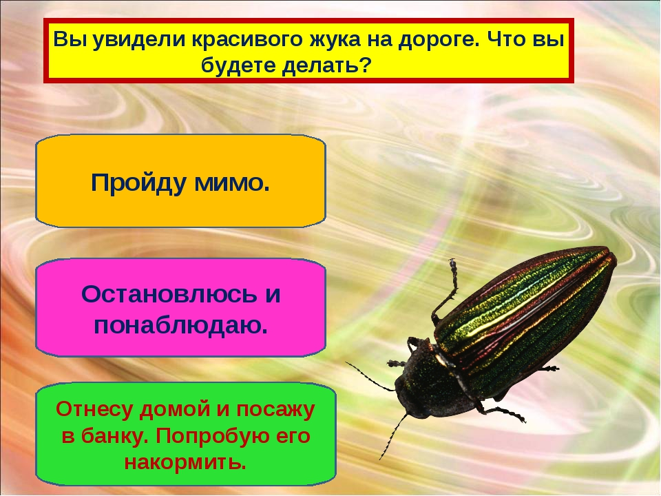 Вы увидели красивого жука на дороге. Что вы будете делать? Пройду мимо. Остан...