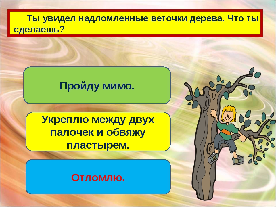 Ты увидел надломленные веточки дерева. Что ты сделаешь? Пройду мимо. Укреплю...