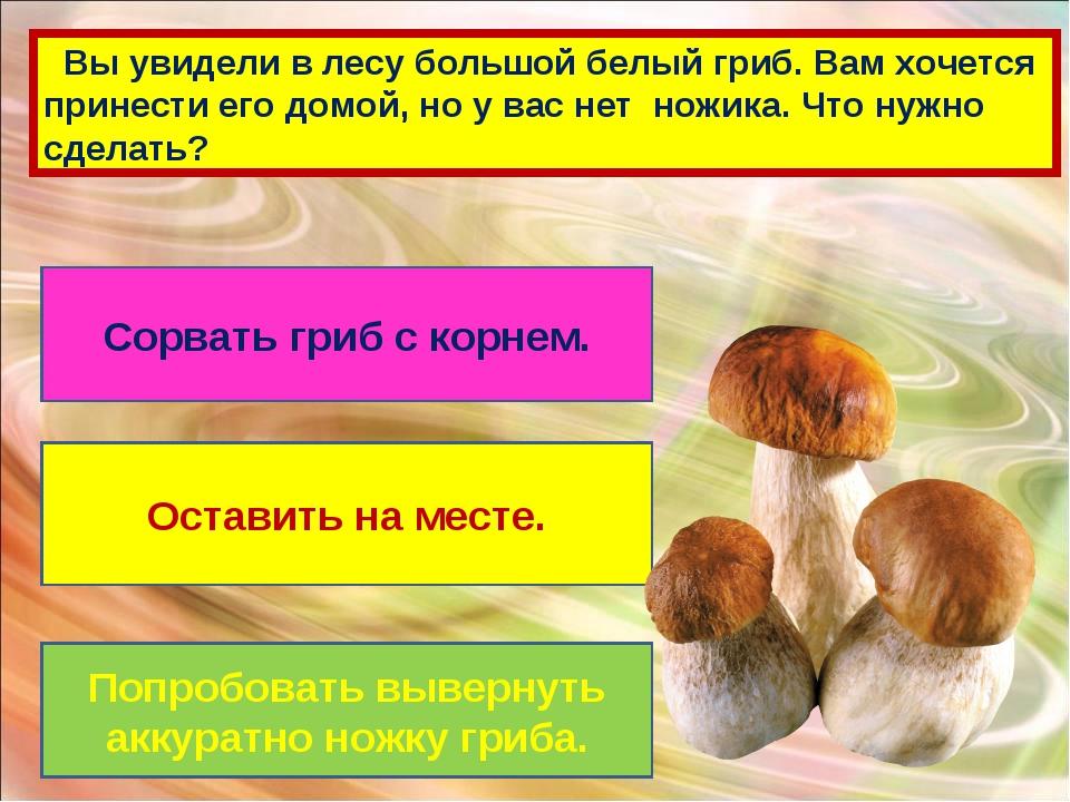 Вы увидели в лесу большой белый гриб. Вам хочется принести его домой, но у в...