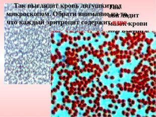 Так выглядит мазок крови при взятии у тебя анализа. Так выглядит кровь лягушк
