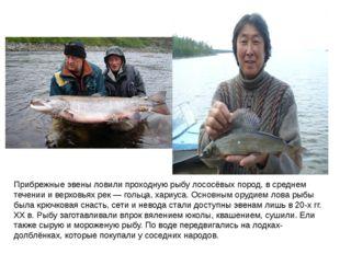 Прибрежные эвены ловили проходную рыбу лососёвых пород, в среднем течении и в