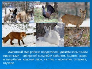 Животный мир района представлен дикими копытными животными – сибирской косул