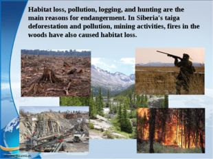 Habitat loss, pollution, logging, and hunting are the main reasons for endang