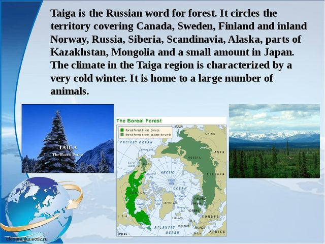 Taiga is the Russian word for forest. It circles the territory covering Canad...