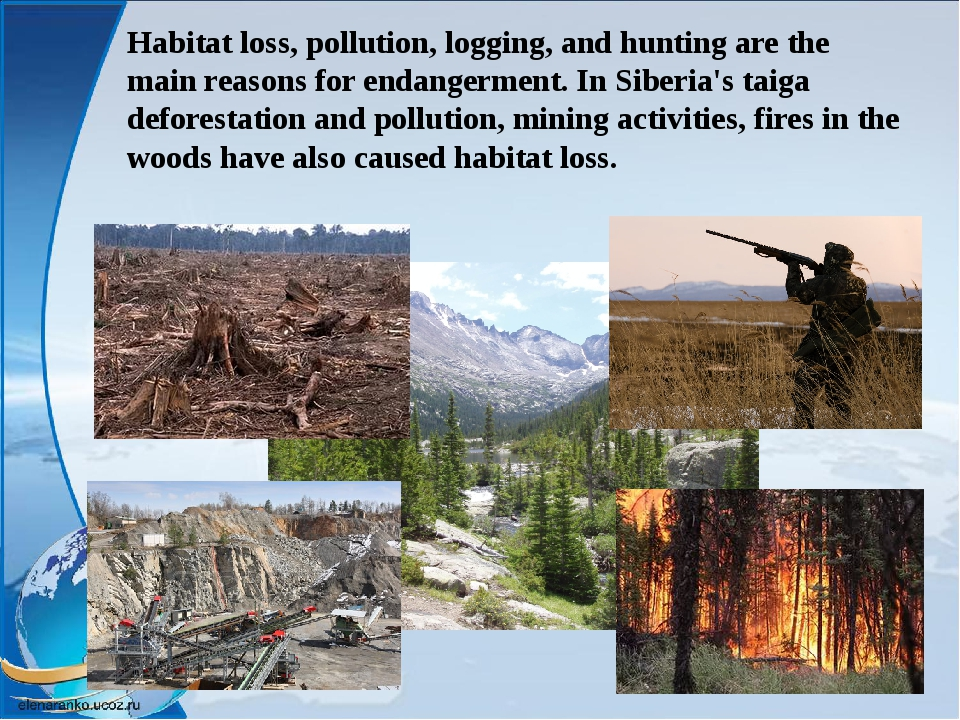 Habitat loss, pollution, logging, and hunting are the main reasons for endang...