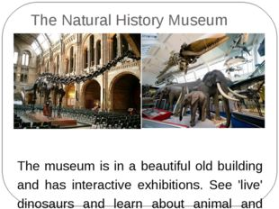 The Natural History Museum The museum is in a beautiful old building and has