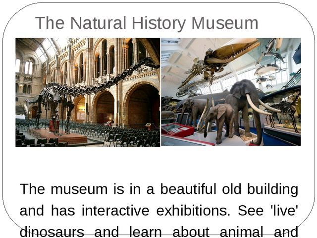 The Natural History Museum The museum is in a beautiful old building and has...