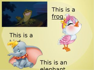 This is a frog. This is a bird. This is an elephant.