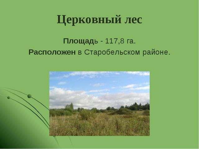 Церковный лес Площадь - 117,8 га. Расположен в Старобельском районе.