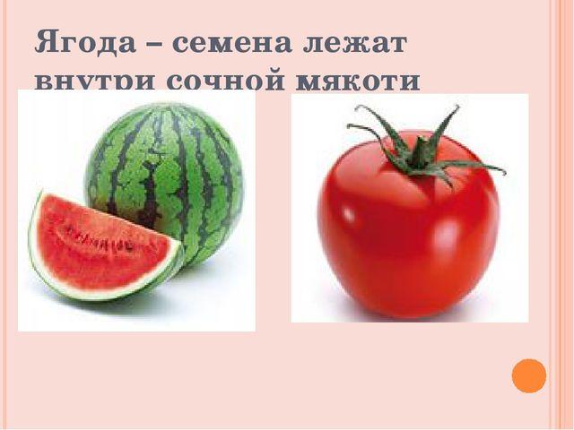 Ягода – семена лежат внутри сочной мякоти плода
