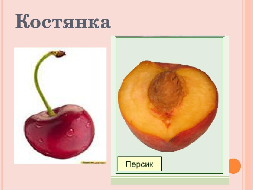 Костянка