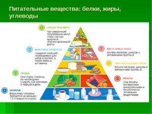 Питательные вещества: белки, жиры, углеводы