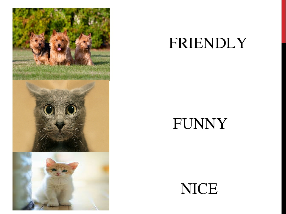 FRIENDLY FUNNY NICE