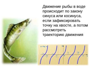Движение рыбы в воде происходит по закону синуса или косинуса, если зафиксиро