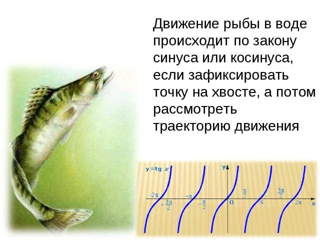 Движение рыбы в воде происходит по закону синуса или косинуса, если зафиксиро...
