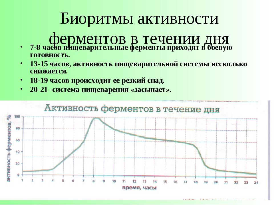 Биоритмы активности ферментов в течении дня 7-8 часов пищеварительные фермент...