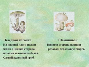 Бледная поганка Шампиньон На нижней части ножки Нижняя сторона шляпки - чехо
