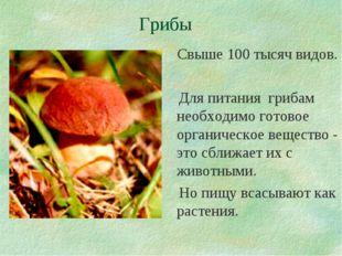 Грибы Свыше 100 тысяч видов. Для питания грибам необходимо готовое органическ