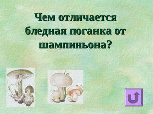 Чем отличается бледная поганка от шампиньона?