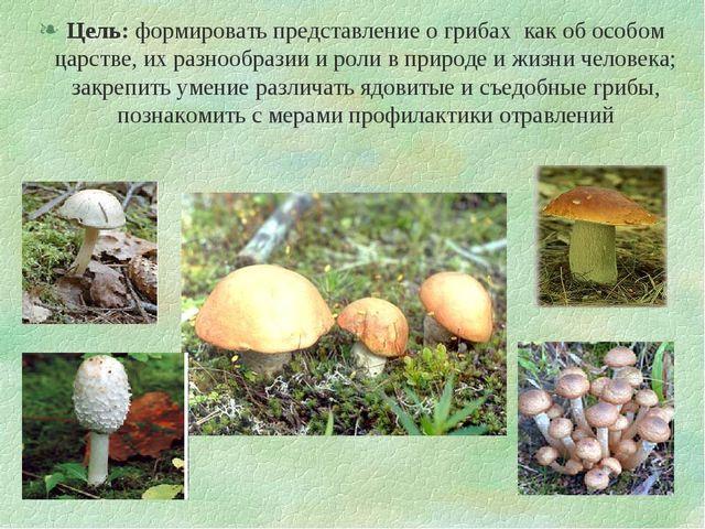 Цель: формировать представление о грибах как об особом царстве, их разнообраз...