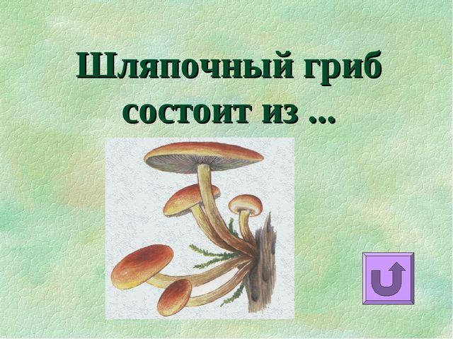 Шляпочный гриб состоит из ...