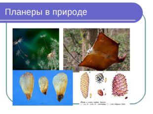 Планеры в природе