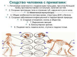 Сходство человека с приматами: 1. Пятипалые конечности с подвижными пальцами,