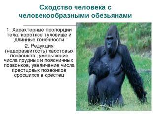 Сходство человека с человекообразными обезьянами 1. Характерные пропорции тел