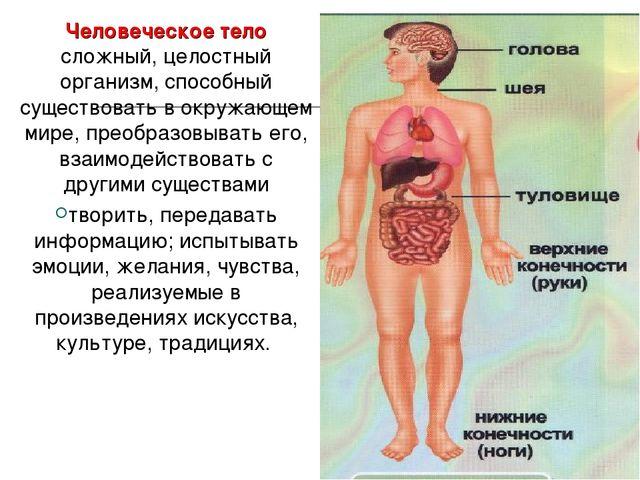 Человеческое тело сложный, целостный организм, способный существовать в окруж...