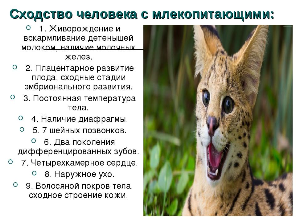 Сходство человека с млекопитающими: 1. Живорождение и вскармливание детенышей...